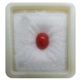 Certified Red Coral Premium 4+ 2.6ct